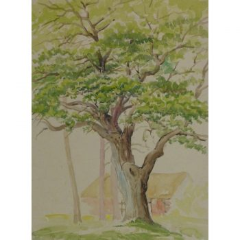 Watercolor Landscape Majestic Oak 9152m