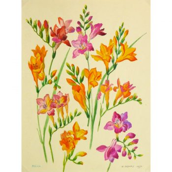 Original Gouache Freesias by M. Raynaly 9156m