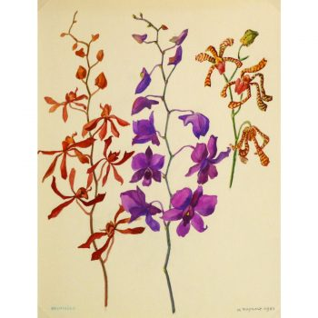 Original Gouache Orchid Study by M. Raynaly 9157m