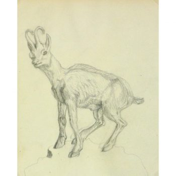 Antique Pencil Drawing Goat - 9188m