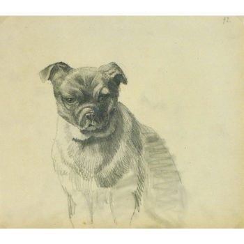 Antique Pencil Drawing Puppy Dog - matted - 9189m
