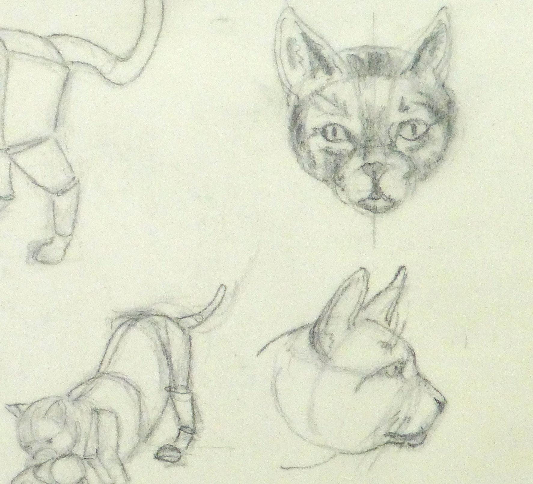Drawing - Cat Anatomy - Original Art, Antique Maps & Prints