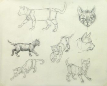 Drawing - Cat Anatomy - Main -9954M