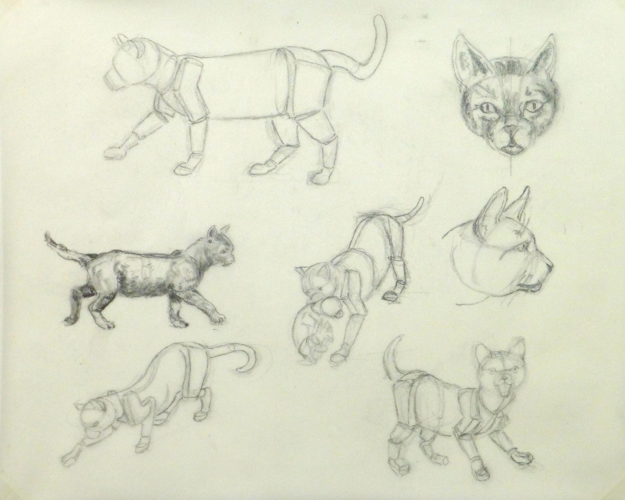 Drawing - Cat Anatomy - Main -9954M