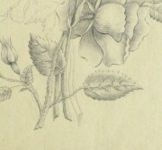 Pencil Drawing - Delicate Bouquet-detail-10162M