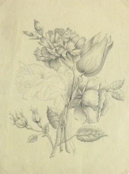 Pencil Drawing - Delicate Bouquet-main-10162M