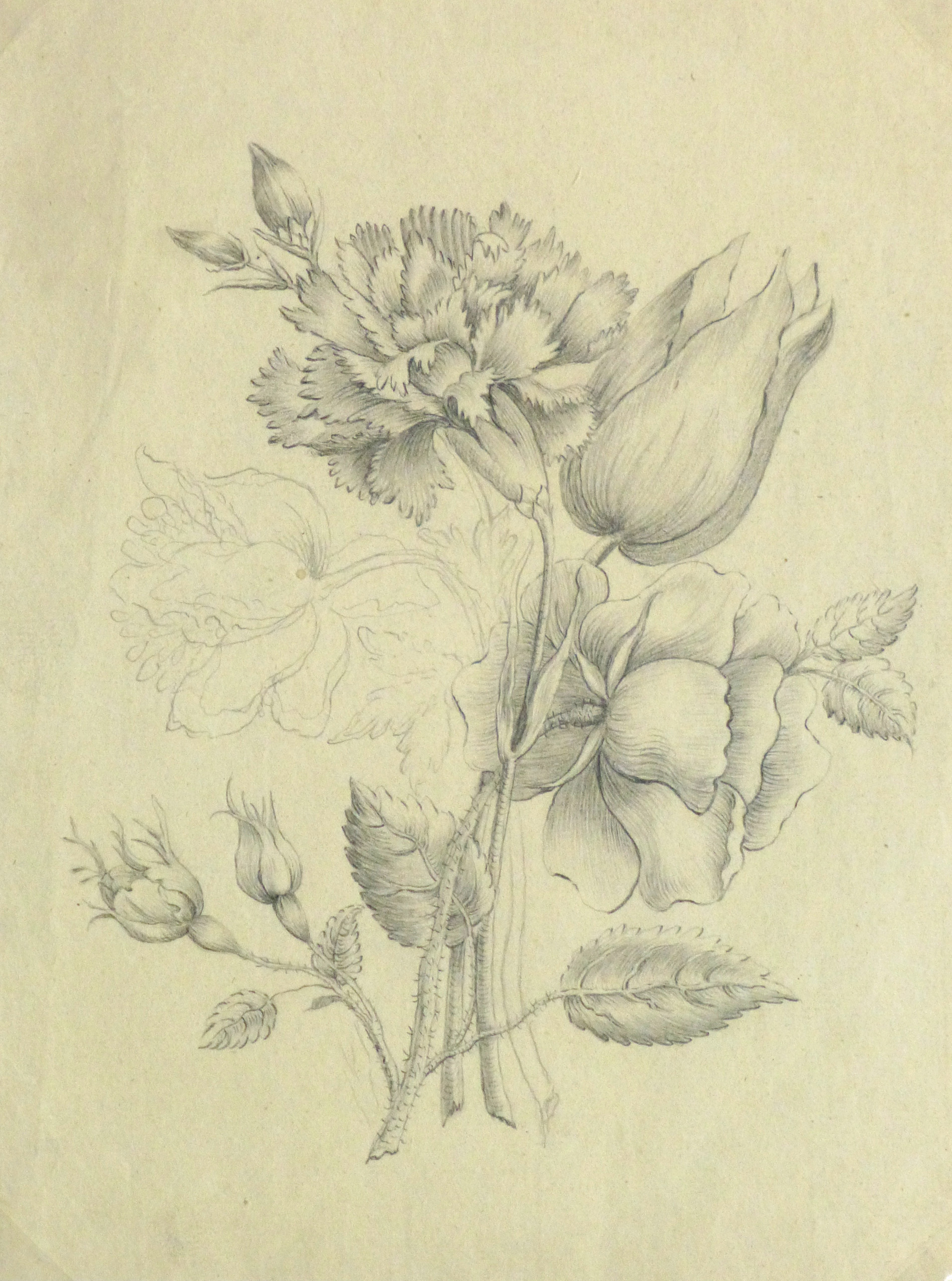 Pencil drawing delicate bouquet main 10162m