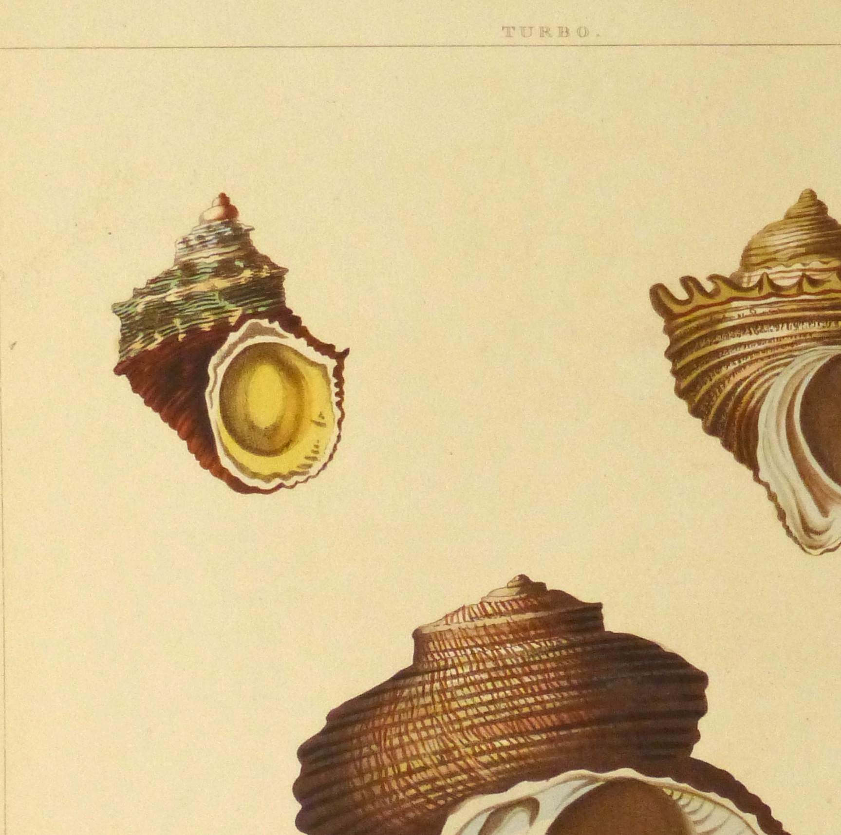 Shell Print, 1810-detail 2-10401M
