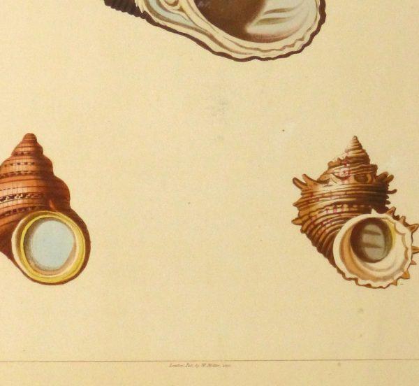 Shell Print, 1810-detail-10401M