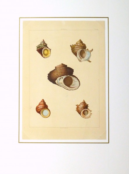 Shell Print, 1810-matted-10401M