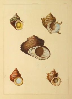 Shell Print, 1810-main-10401M