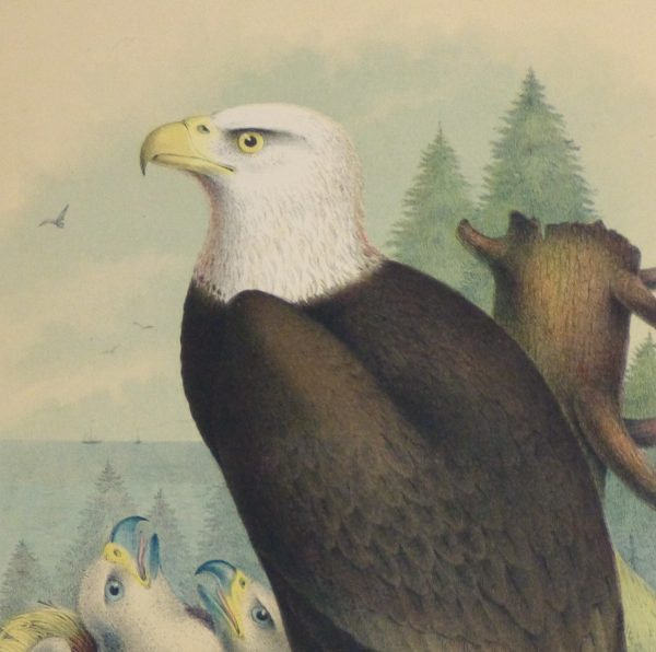 Bald Eagle Print, 1881-detail 2-10419M