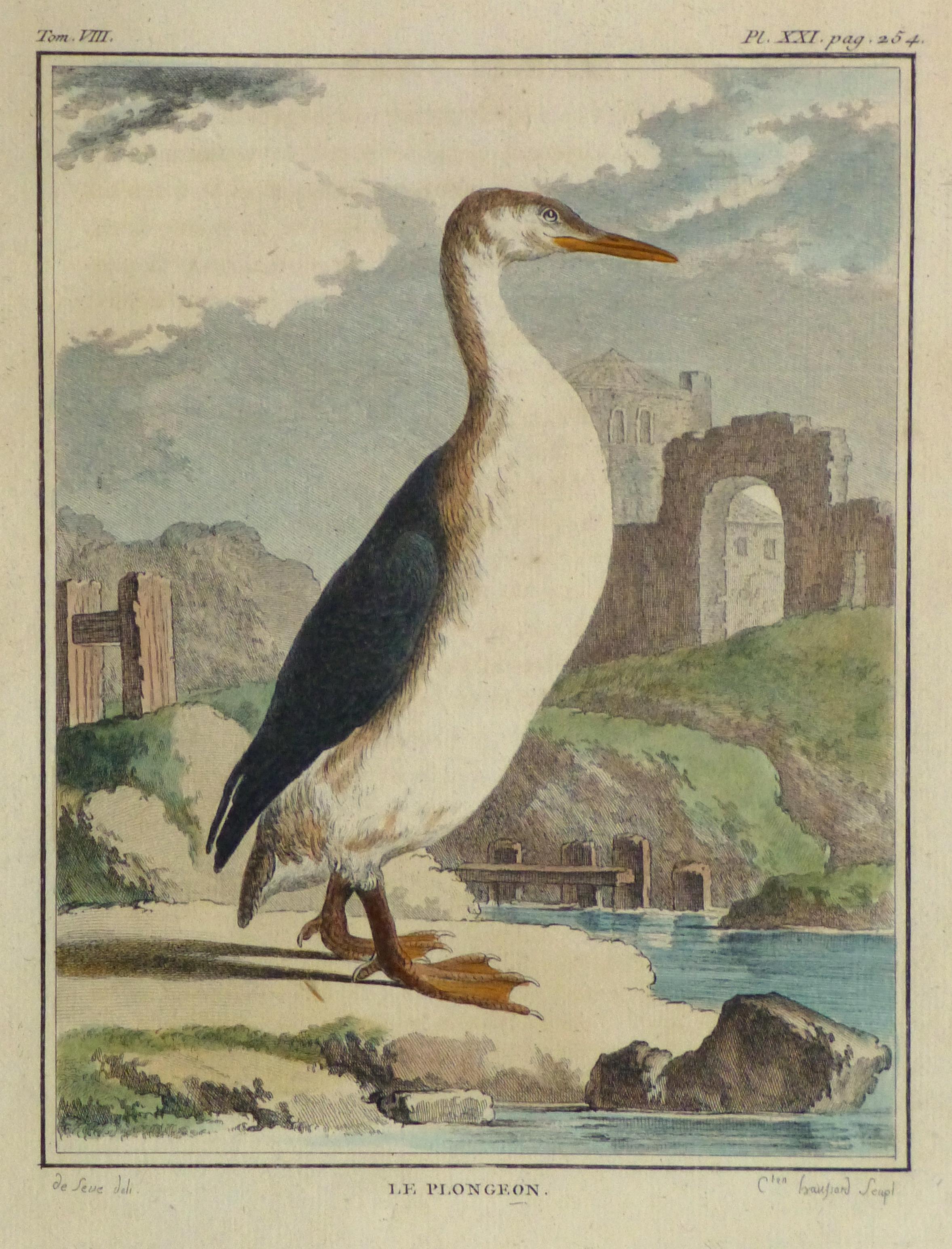 Loon Print, Circa 1770-main-10421M