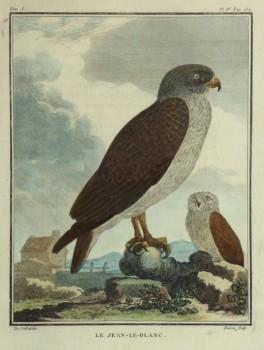 Snake Eagle Print, Circa 1770-main-10422M