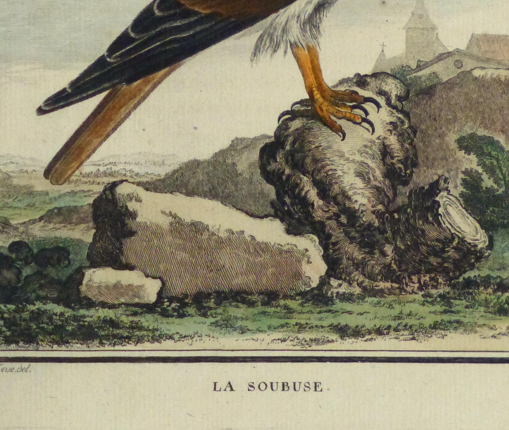Bird of Prey Print, Circa 1770-detail-10423M