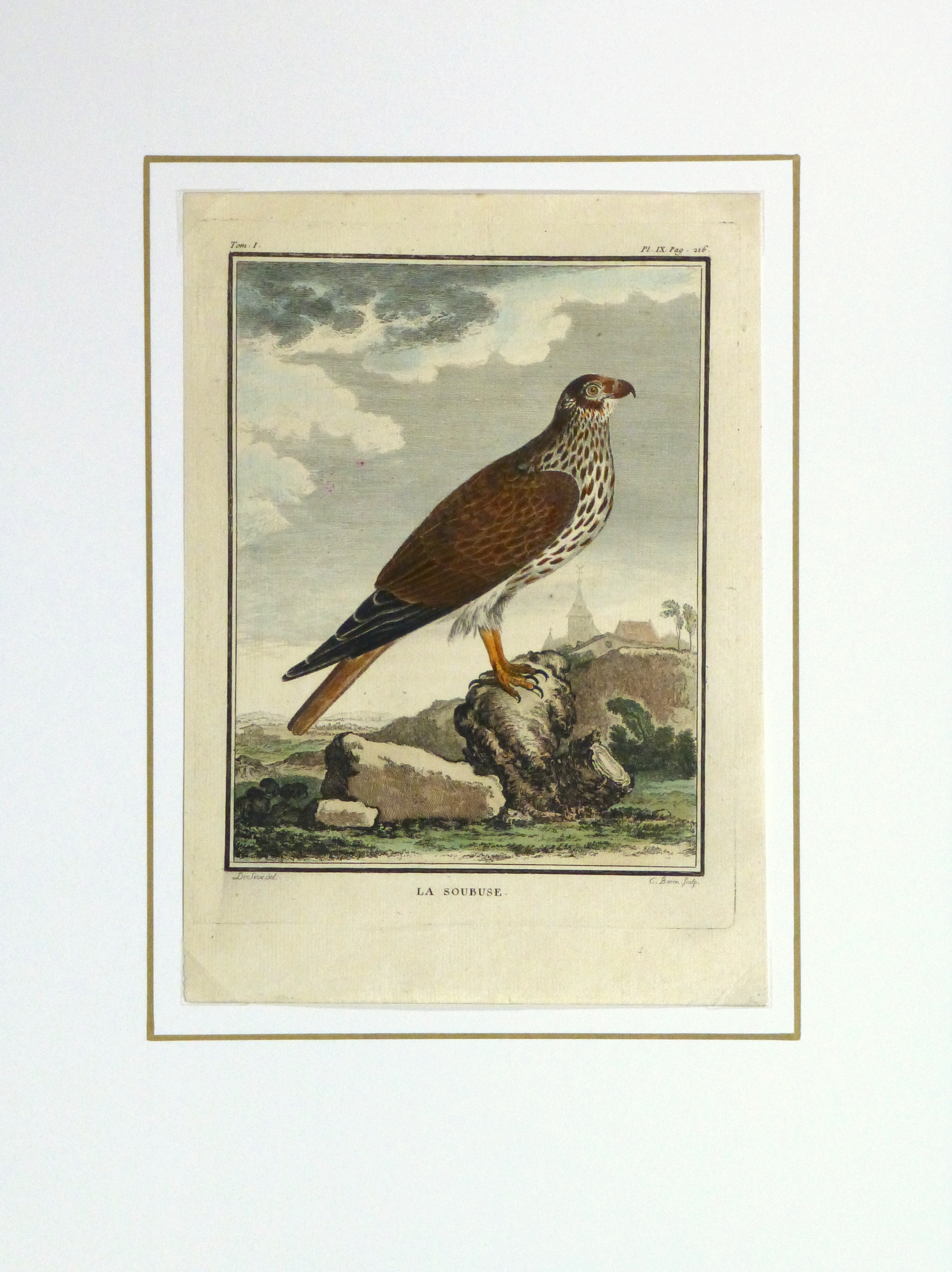 Bird of Prey Print, Circa 1770-matted-10423M