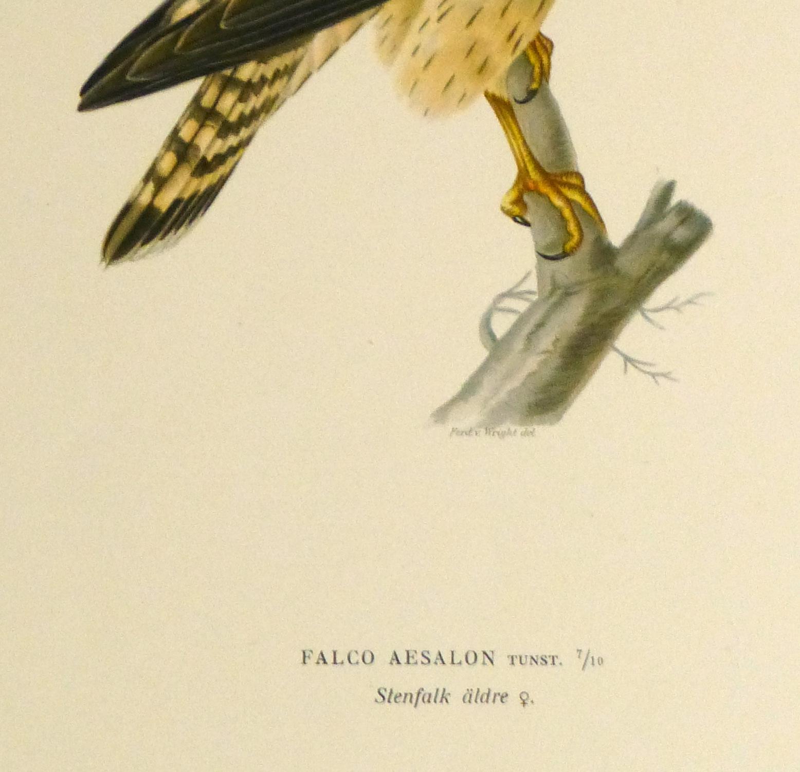 Merlin Falcon Print, 1929-detail-10428M