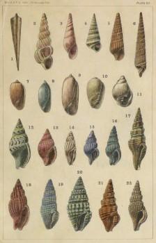 Sea Shells Print, 1900-main-10429M