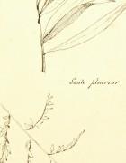 Weeping Willow, Circa 1930-detail-7841K