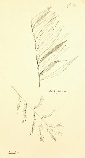 Weeping Willow, Circa 1930-main-7841K