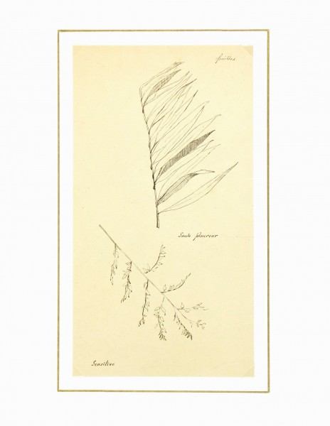 Weeping Willow, Circa 1930-matted-7841K