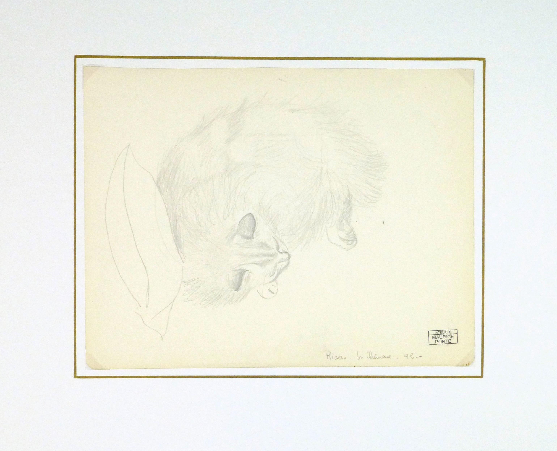 Drawing - Sleeping Cat, Circa 1990-matted-8292K