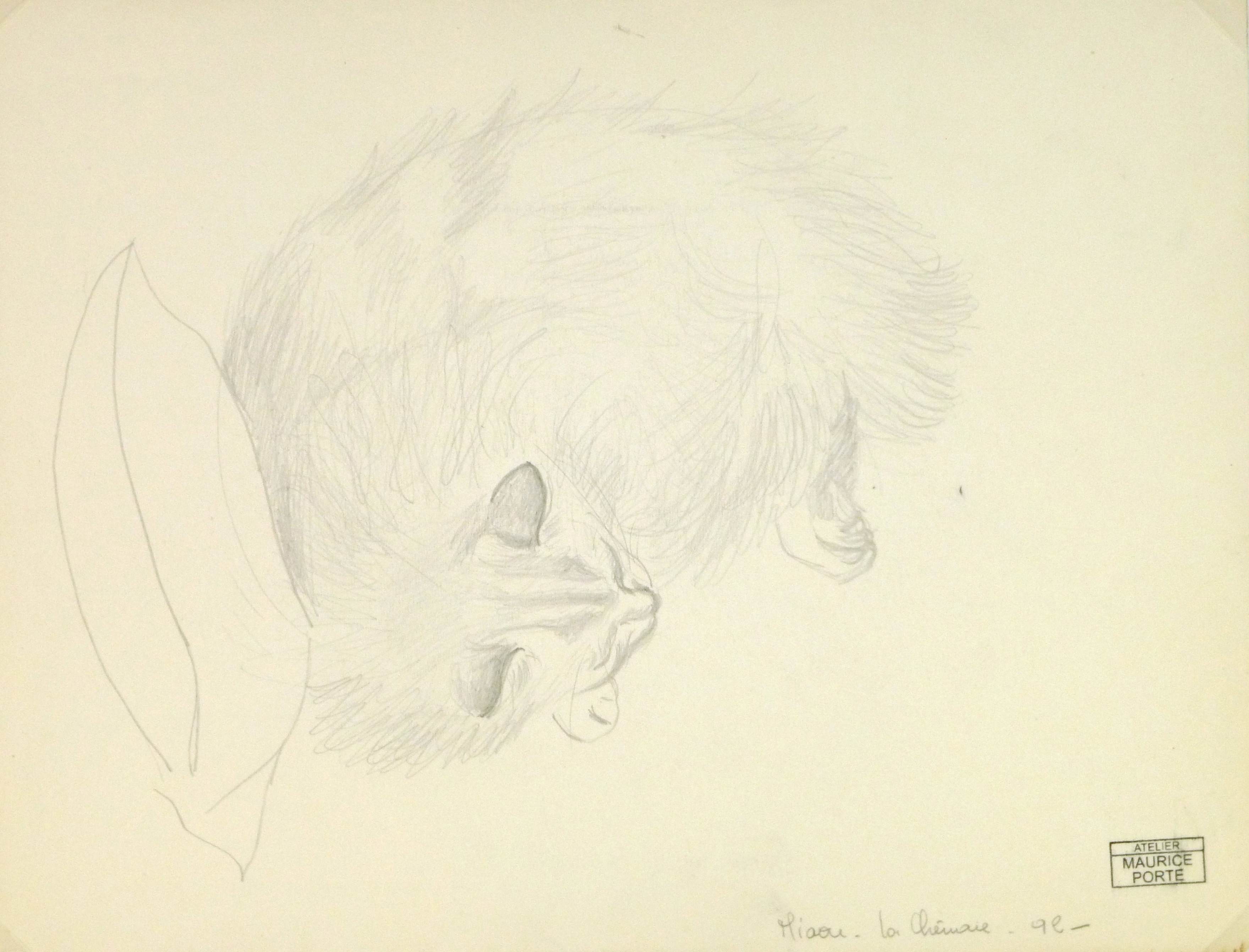 Drawing - Sleeping Cat, Circa 1990-main-8292K