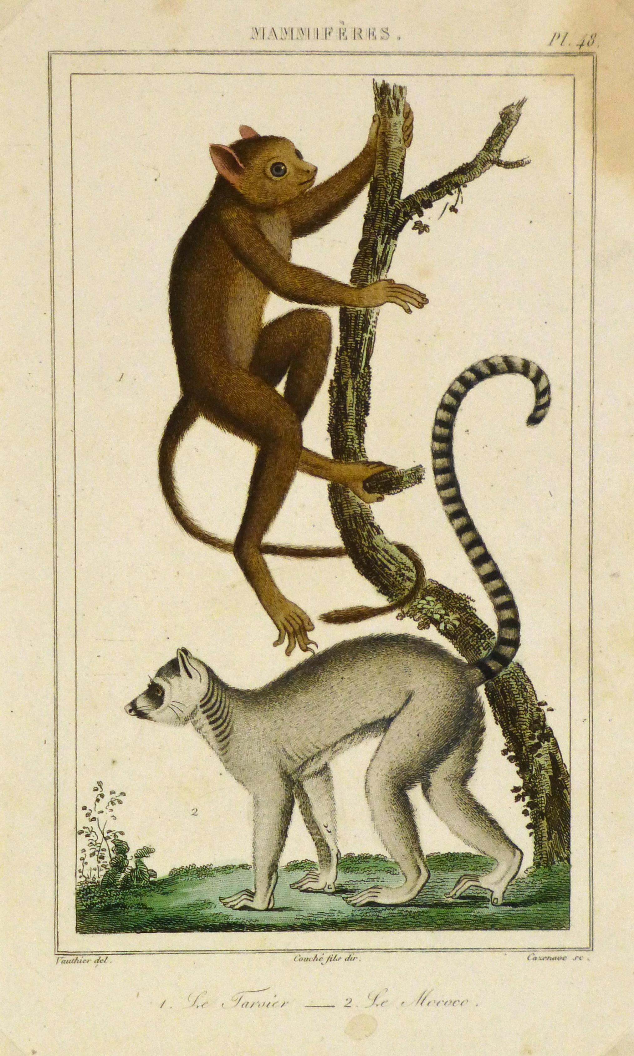 Tarsier & Lemur Print, Circa 1850-main-8467K