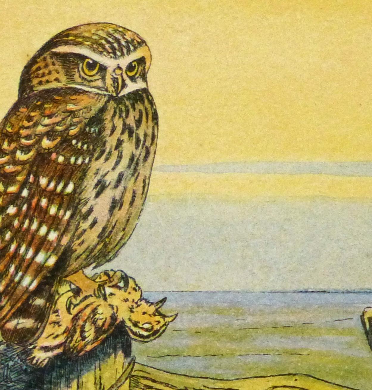 Burrowing Owl Print, Circa 1920-detail 2-9213K