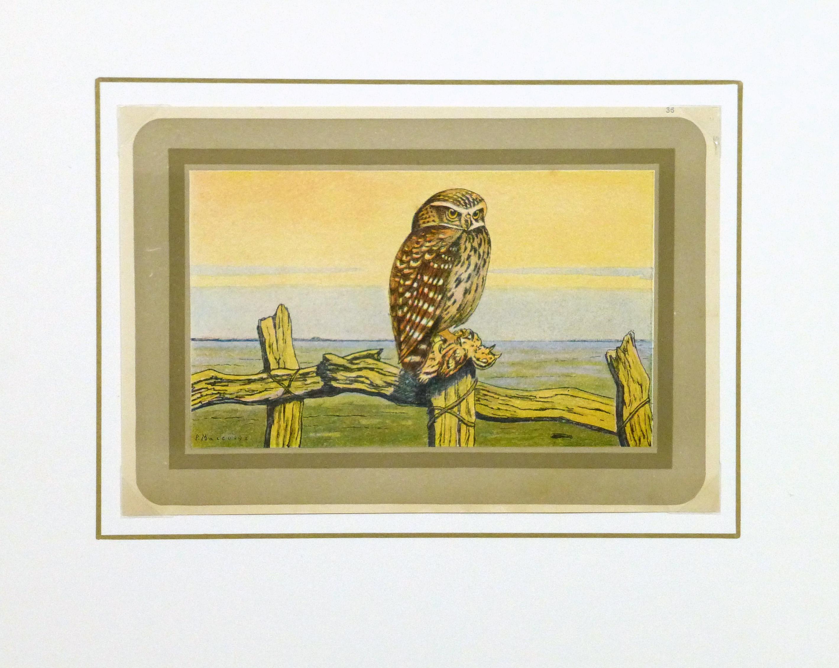 Burrowing Owl Print, Circa 1920-matted-9213K