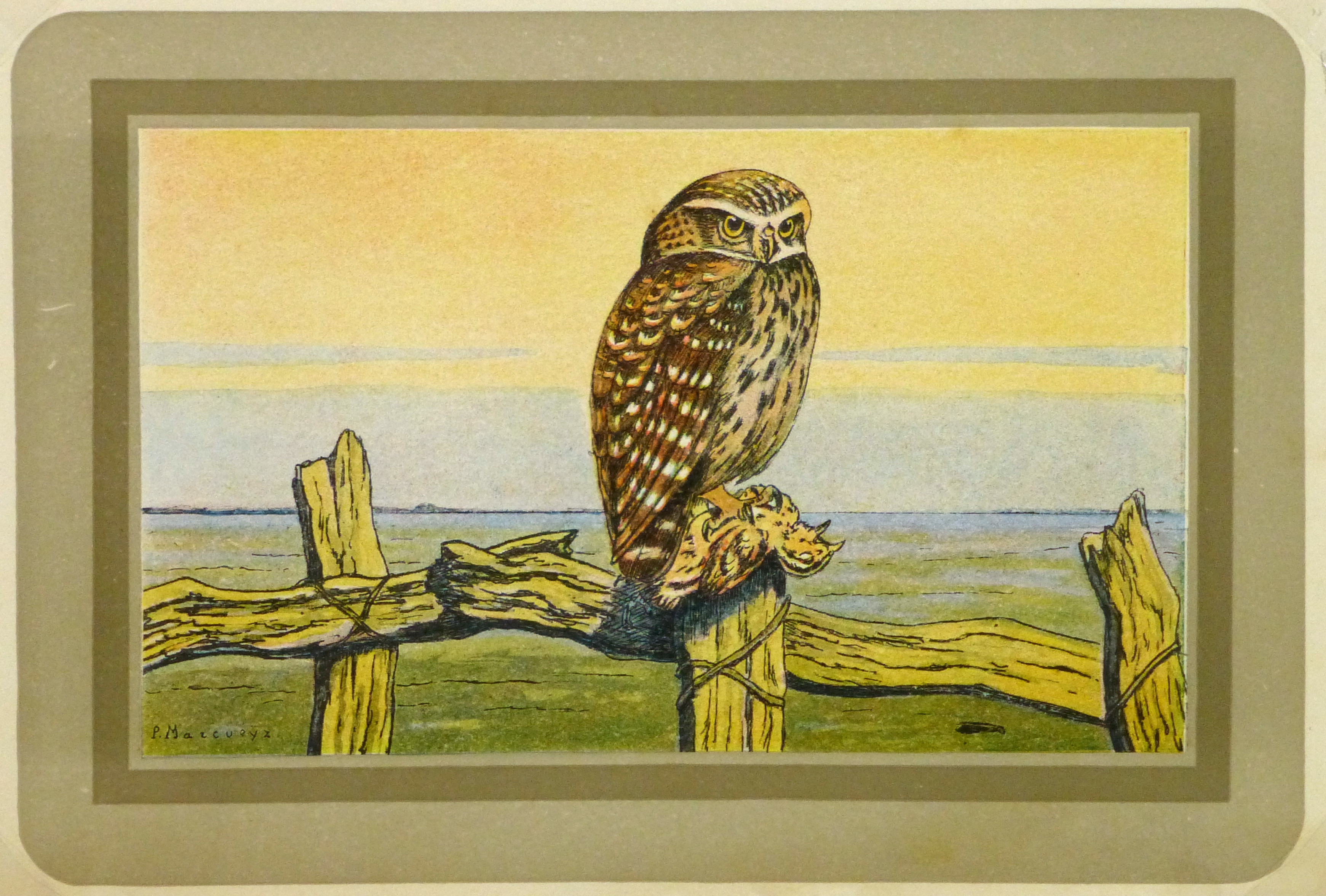 Burrowing Owl Print, Circa 1920-main-9213K