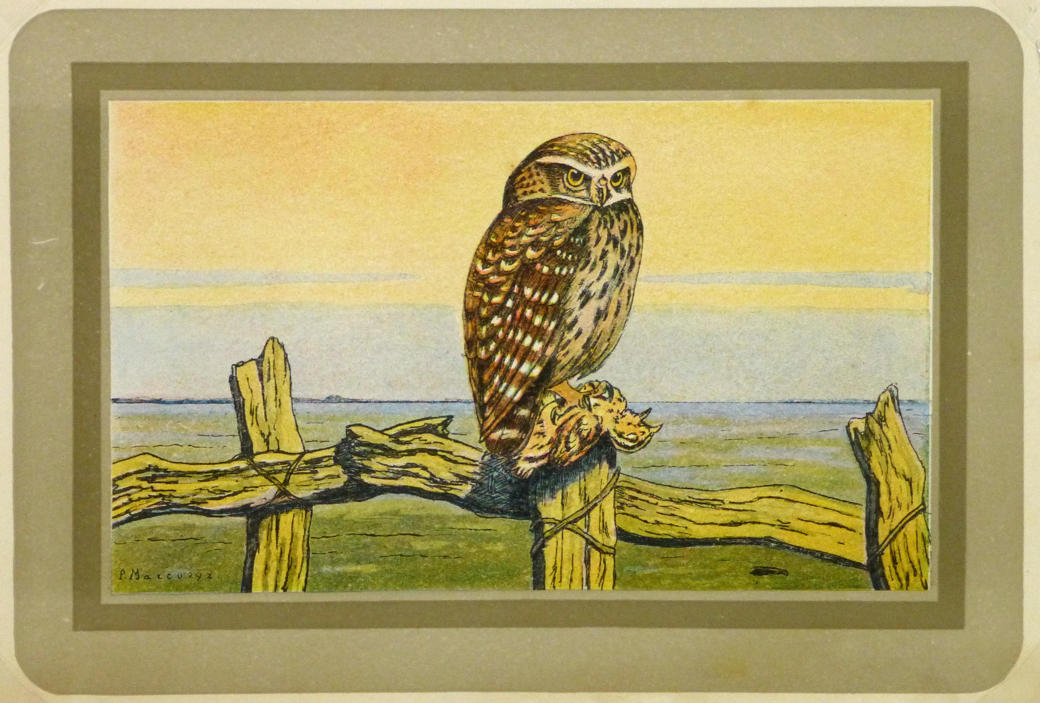 Burrowing Owl Print, Circa 1920-main-9213K