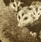 Possums, Circa 1960-detail 2-9564K