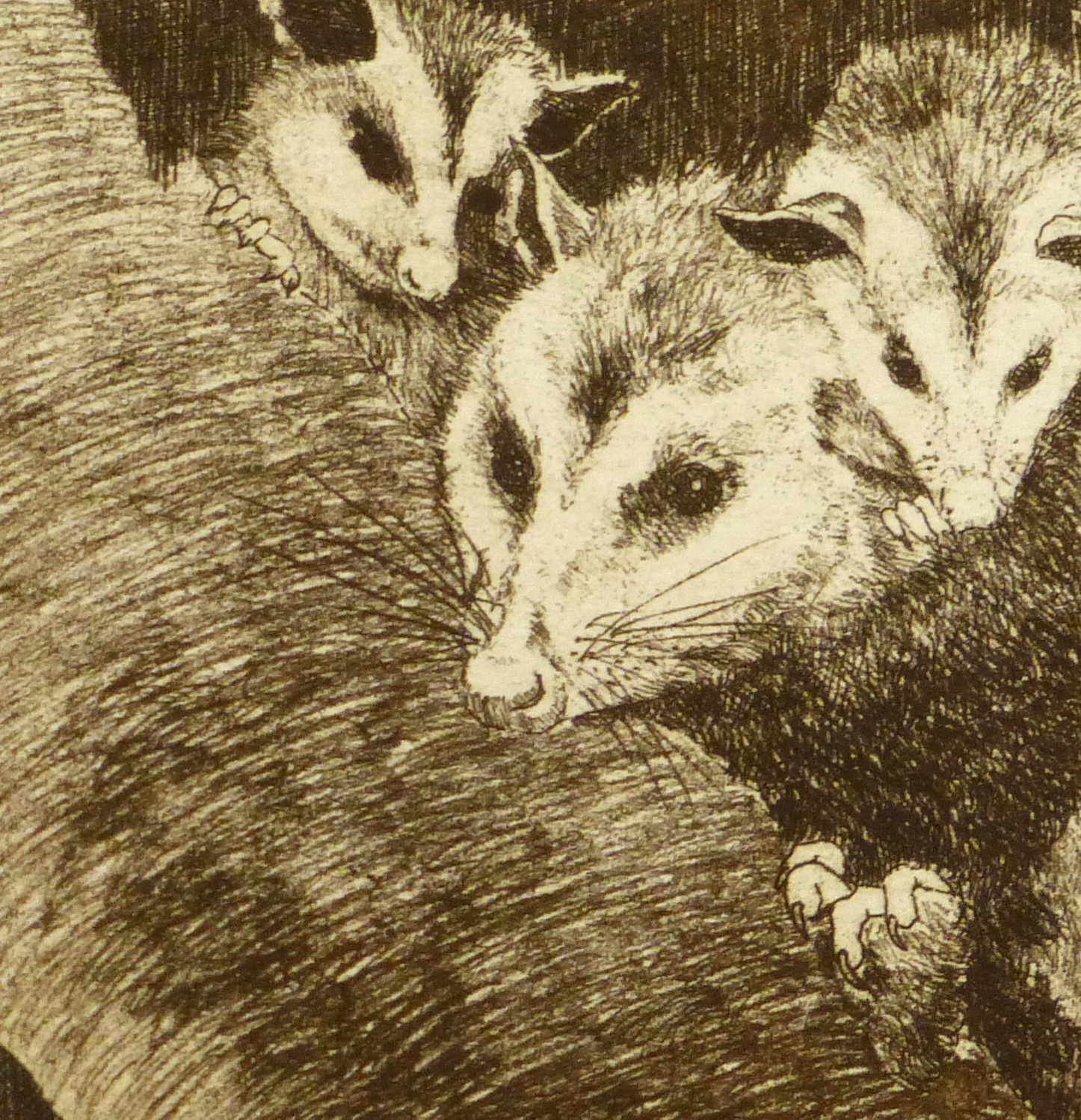 Possums, Circa 1960-detail 2-9564K