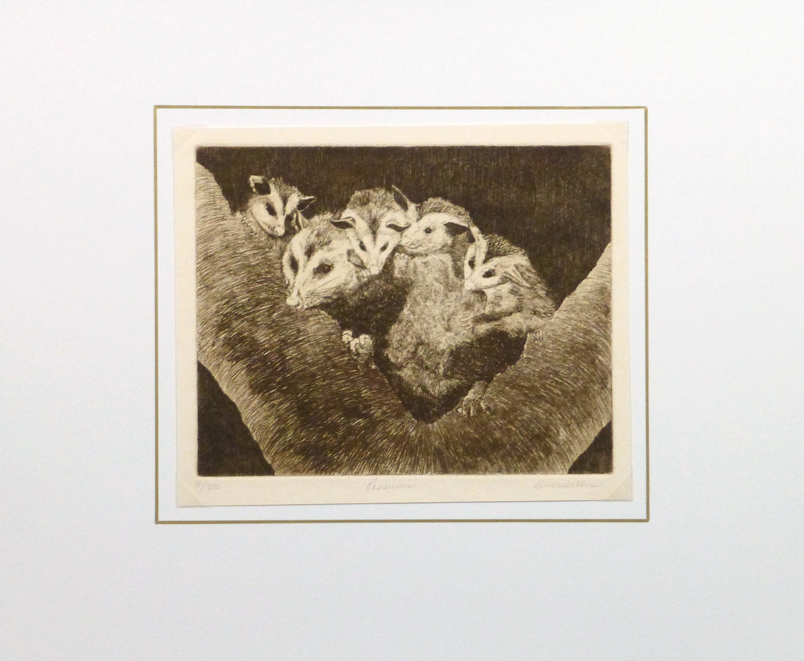 Possums, Circa 1960-matted-9564K