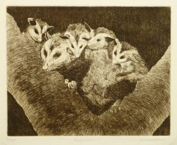 Possums, Circa 1960-main-9564K
