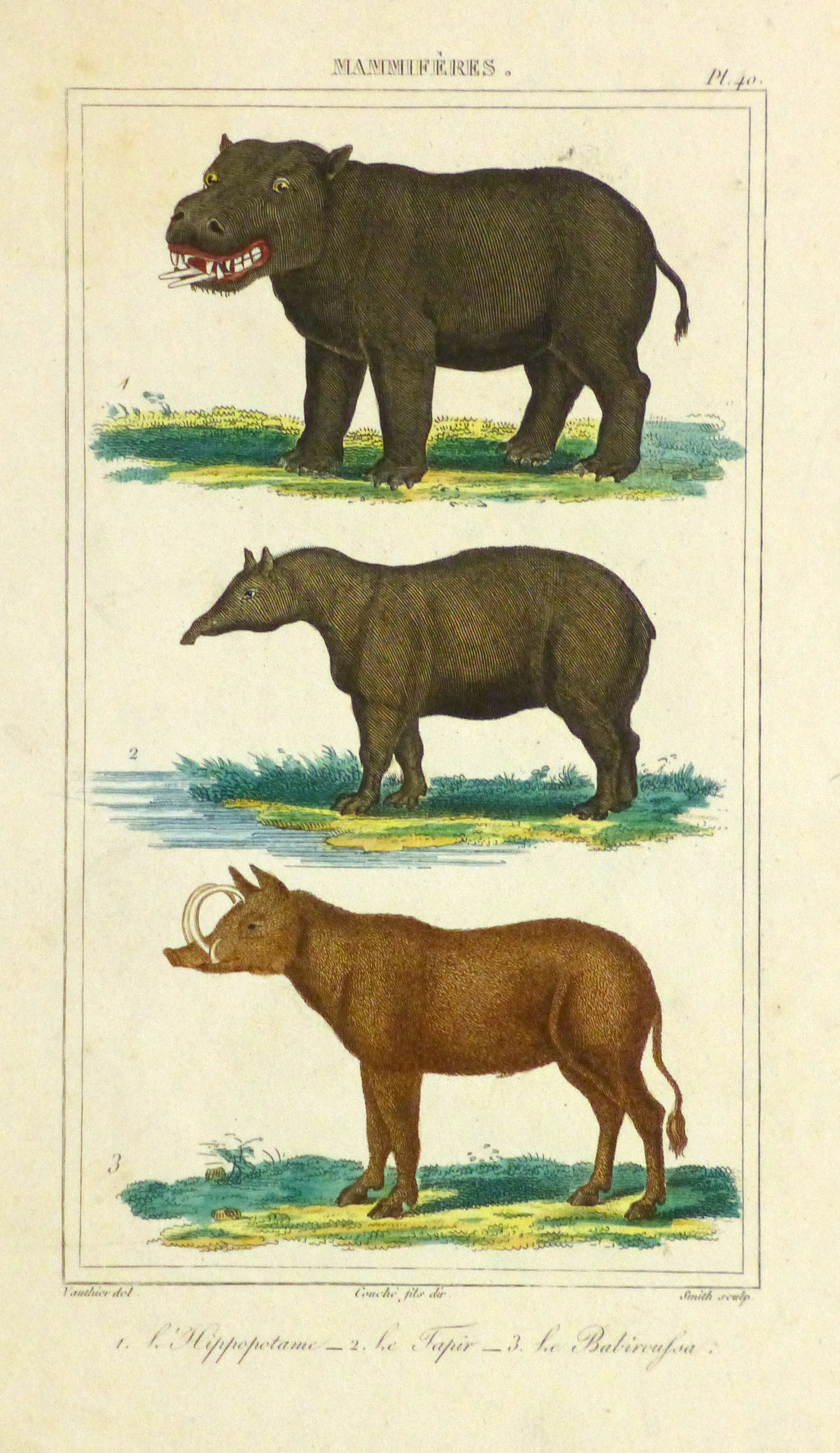 Hippopotamus Print, Circa 1840-main-9603K