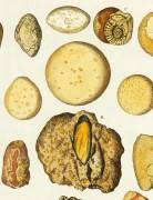 Geology, Circa 1790-detail-K4888