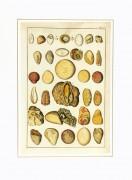 Geology, Circa 1790-matted-K4888