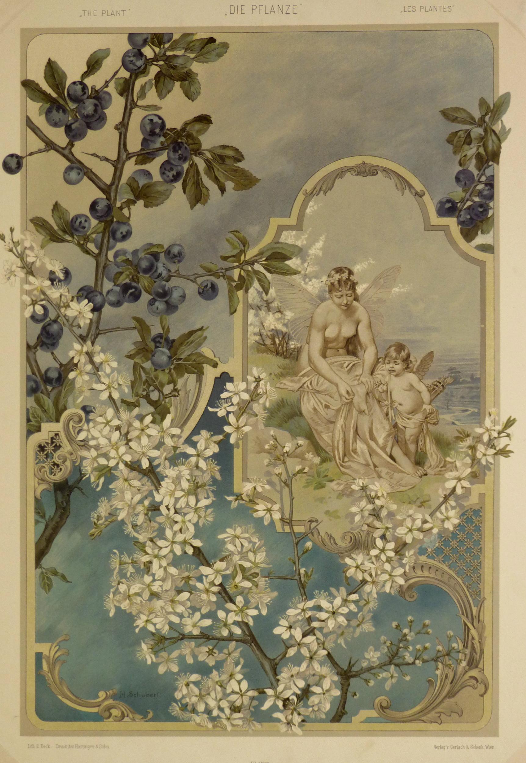 Angels & Blueberries, 1886-main-KB1656