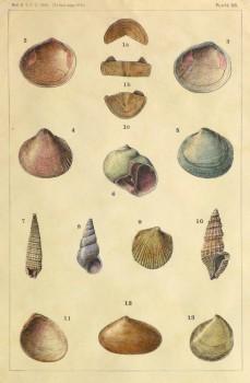 Shell Print, 1900-main-10458M