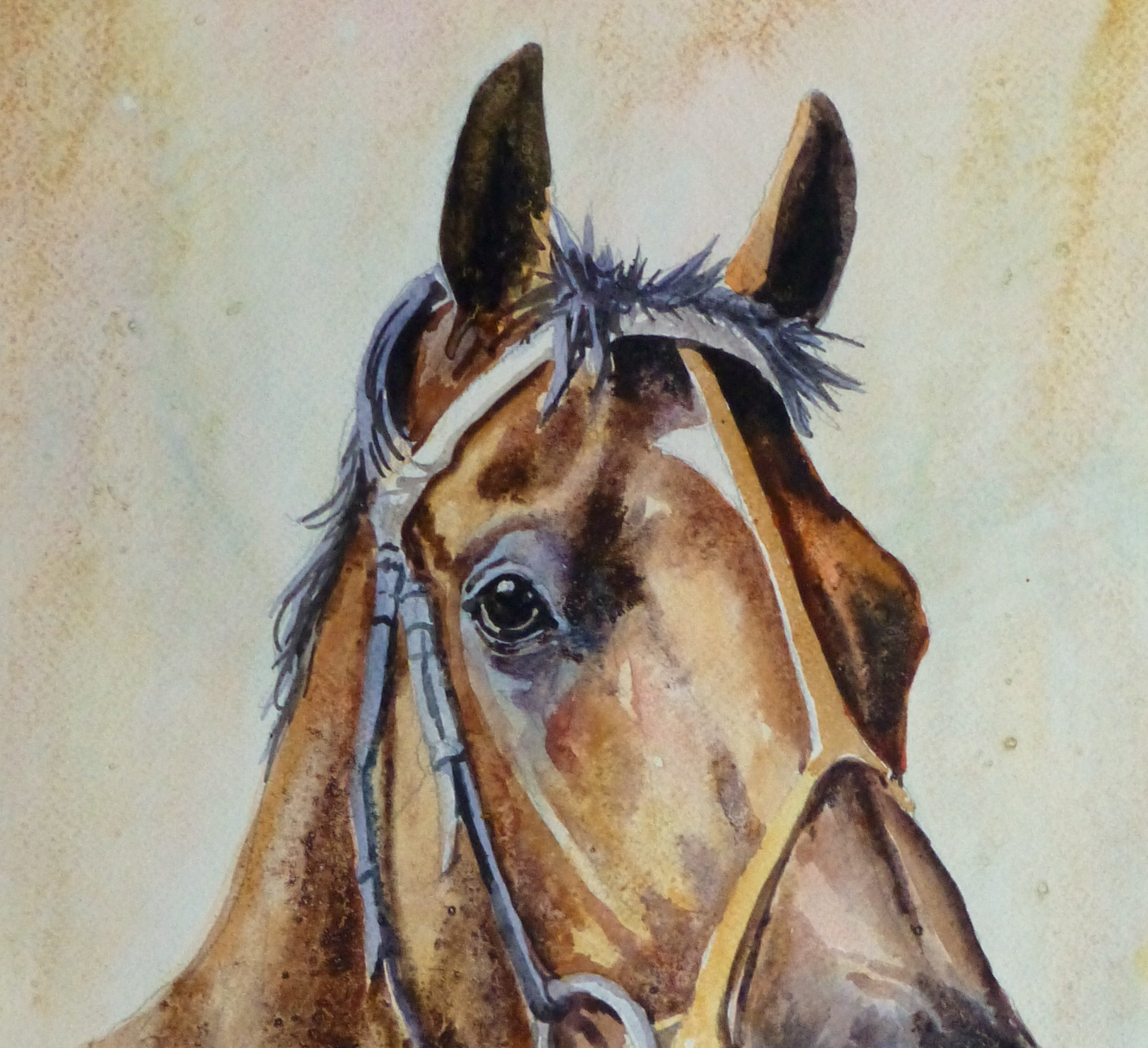 Equine Portrait Watercolor, 2011-detail 2-10536M