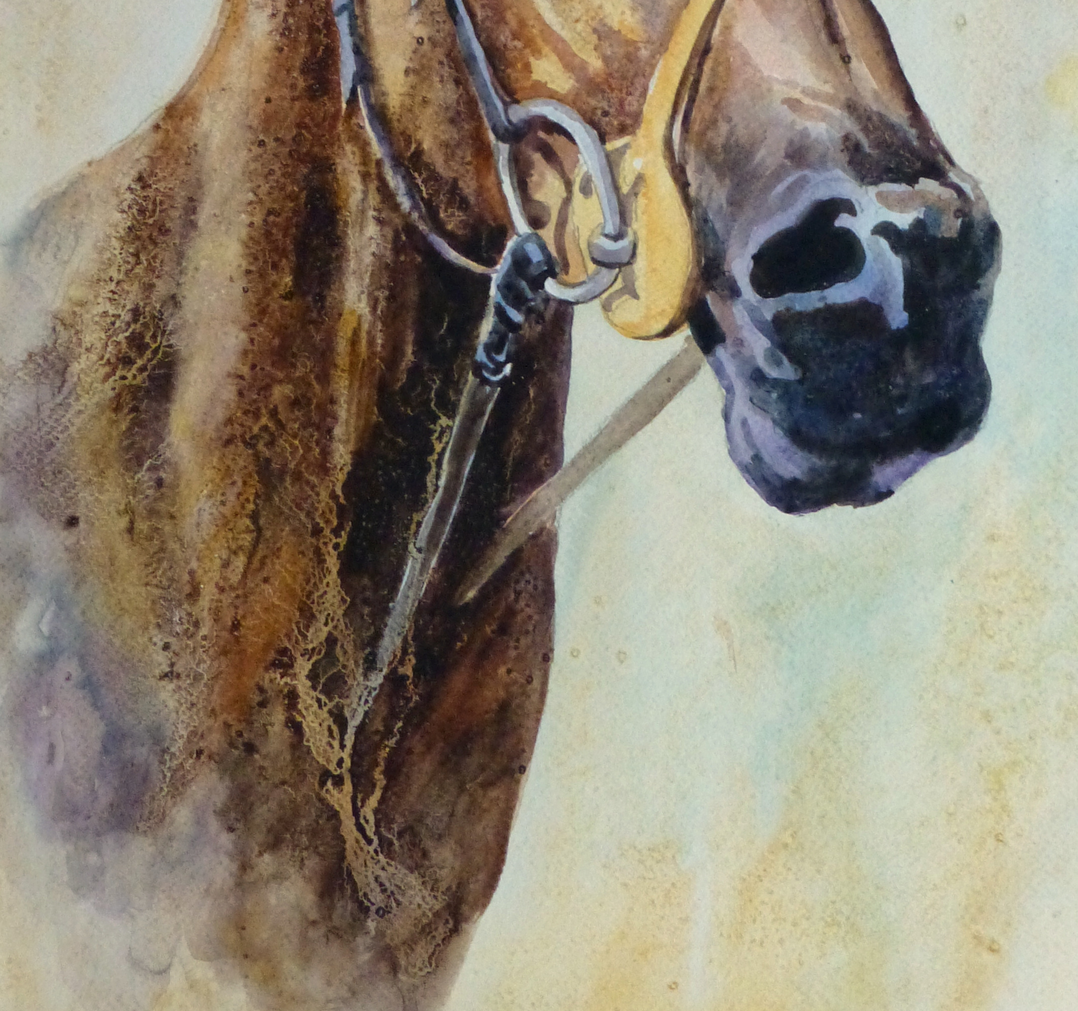 Equine Portrait Watercolor, 2011-detail-10536M