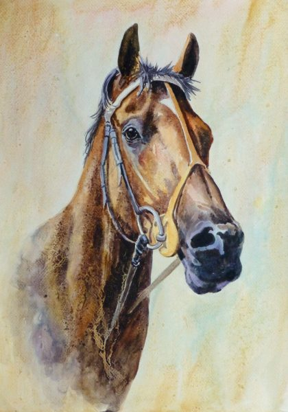 Equine Portrait Watercolor, 2011-main-10536M