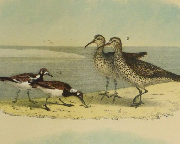Lithograph- Sandpipers, 1881-detail 2-10546M