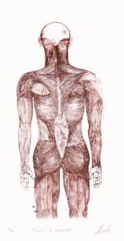 Aquatint - Anatomia, 2012-main-6081G