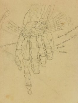 Drawing - Hand Study-main-7517G
