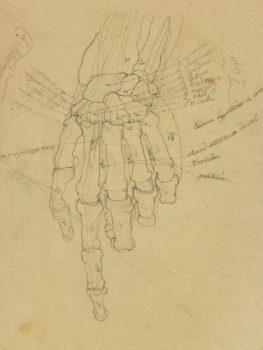 Drawing - Hand Study-main-7517G