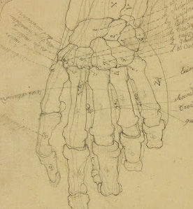 Drawing - Hand Study-detail-7517G
