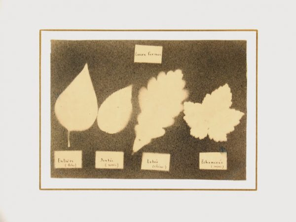Ink Drawing - Leaf Forms, Circa ?-matted-7533G